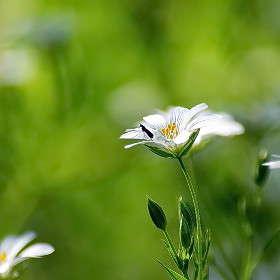 Лесной цветок-2