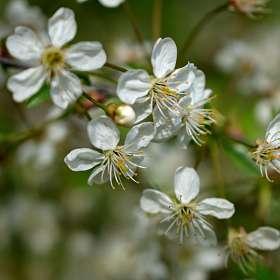 Когда весна в разгаре..Цветок расцвёл прилежно. 12.05.2019 г. (8)