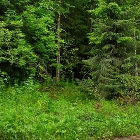 «Лес после дождя».(14)