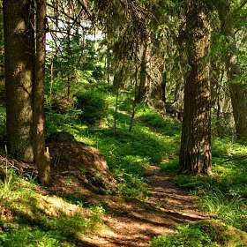 В лесу на Карельском перешейке. (1)