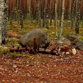 «В осенним лесу». (1)