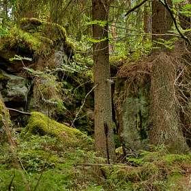 Камни в лесу. (4)