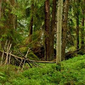 Камни в лесу. (1)