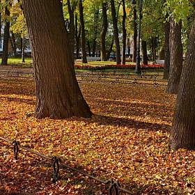 Осень в Румянцевскому саду.