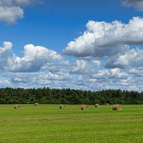 Сенокосное поле