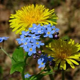 Весенний цветочный натюрморт