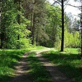 В майском лесу под Смоленском