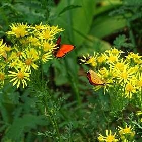 Летняя картинка с бабочками