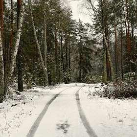 В зимнем лесу под Смоленском