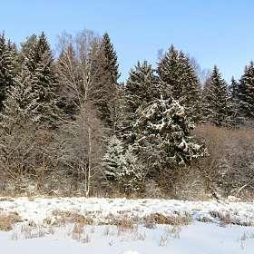 Озёрный берег в январе.