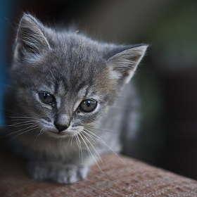 Просто котенок....