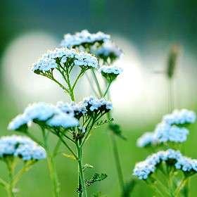 Надоело фотографировать цветы 2