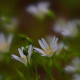 Весеннее