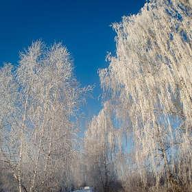 Снежная аллея.
